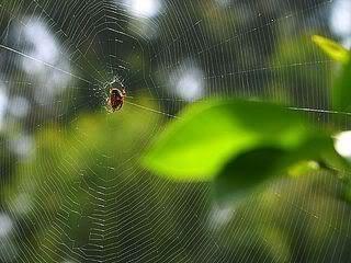 Spider,Network