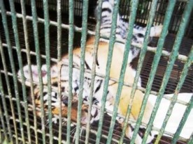 For Php 50/pax you can have your photo taken with this playful cub.