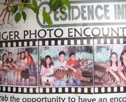 Dare to share the cage with a tiger for a photo op?