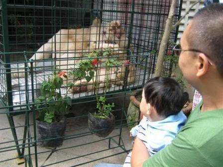 This is also my first time to see a white lion but didn't let my son notice.